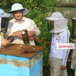 Дымарь лечение укусами пчел
