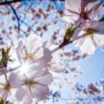 Весна наступила 1 февраля